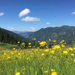 © Riesneralm - Gipfelerlebnis RIesneralm