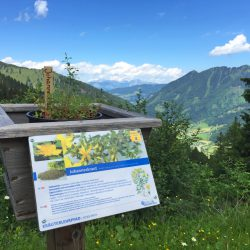 © Riesneralm - Gipfelerlebnis Kräuterlehrpfad