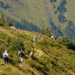 Sommerberg - Riesneralm - Donnersbachwald - Wandern