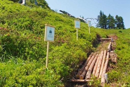 Bergbahnen - Riesneralm - Sommer - Gipfelbarfussweg