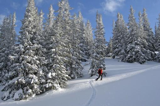 © Ski Riesneralm - Weitere Aktivitäten - Schneeschuhwandern Donnersbachwald