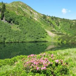 Tourismusverband Donnersbachwald in der Urlaubsregion Schladming-Dachstein